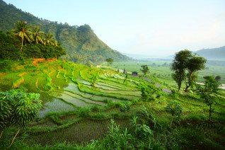 Myanmar's Rice Bowl of Dreams