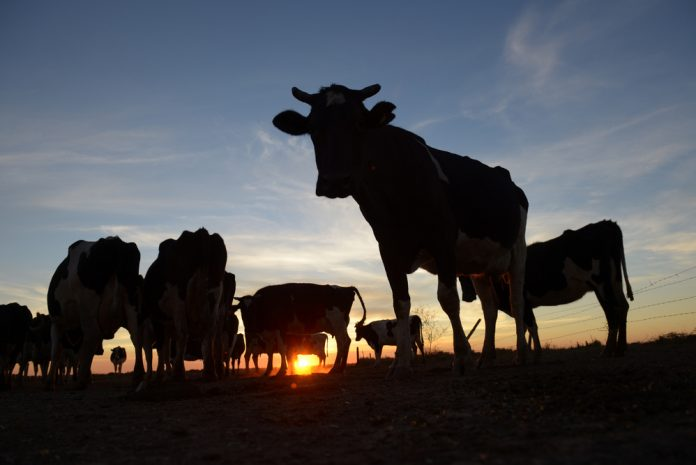 Argentina: Beef, Bodegas and…Bitcoin?