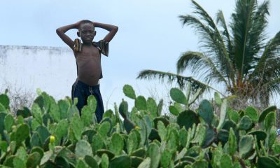 PEMBA, MOZAMBIQUE - 5 DESEMBER 2008: Unknown African boy stands among the cacti on the Indian ocean in Pemba, Mozambique - 5 December 2008. Lush thickets of cactuses.