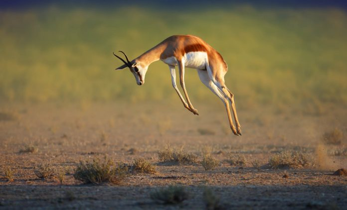 Hunting Gazelles: Morgan Stanley's Guide to Companies That Jump 1