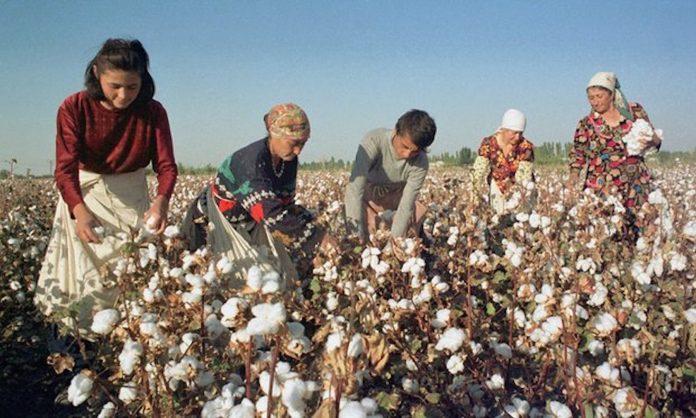 Need a TV in Uzbekistan? Pick Cotton