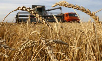 russia wheat
