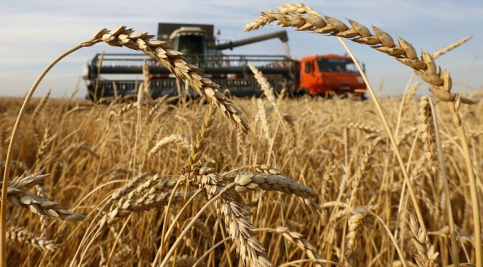 Emerging Markets: Russia's Wheat Bonanza