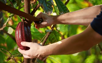 These Two African Countries Account For 60% Of the World's Cocoa Production 2